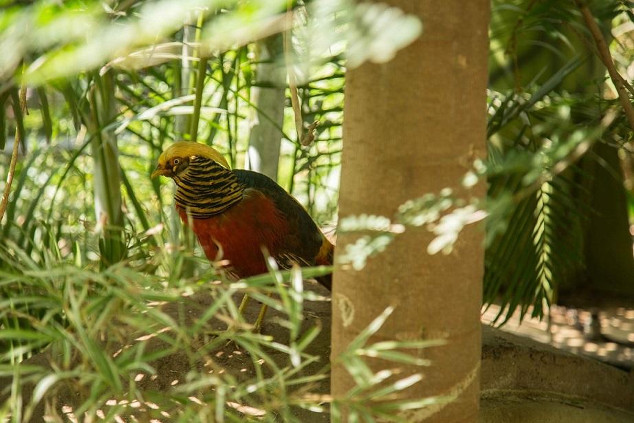 A Walk Inside Mumbai's First Interactive Bird Park   Verve