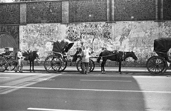 Horses On Charni Road