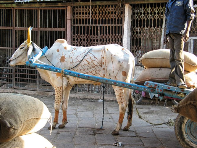 Dressing up animals for The Darjeeling Limited
