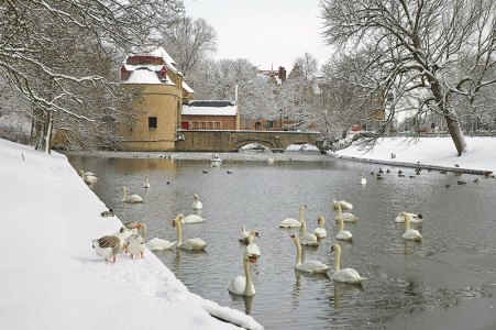 Bruges' wintry charm