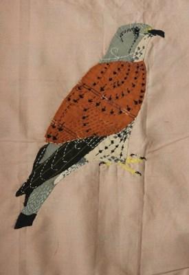 Common Kestrel
