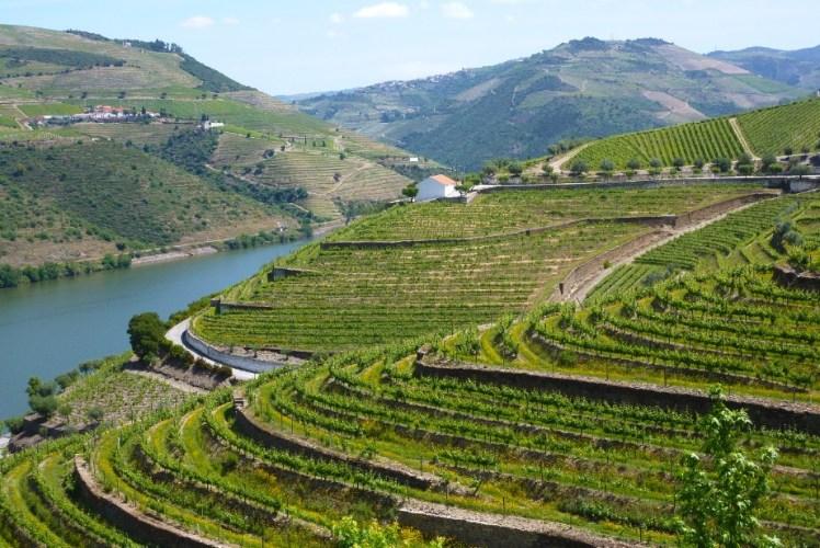 Vineyards, Duoro Valley
