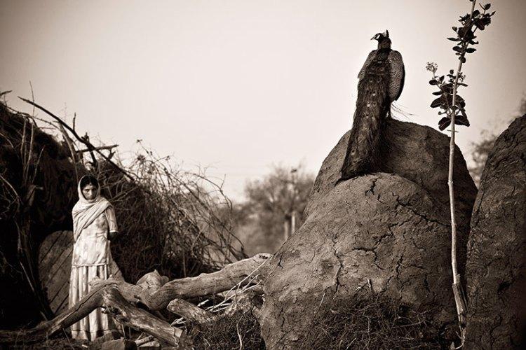 Shanti Devi Bishnoi and a peacock near Lohawat in Rajasthan