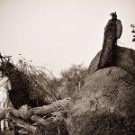 Franck Vogel, French Photographer, Bishnois, Rajasthan