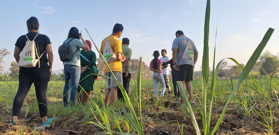 An EFly Tours group at a sugarcane field