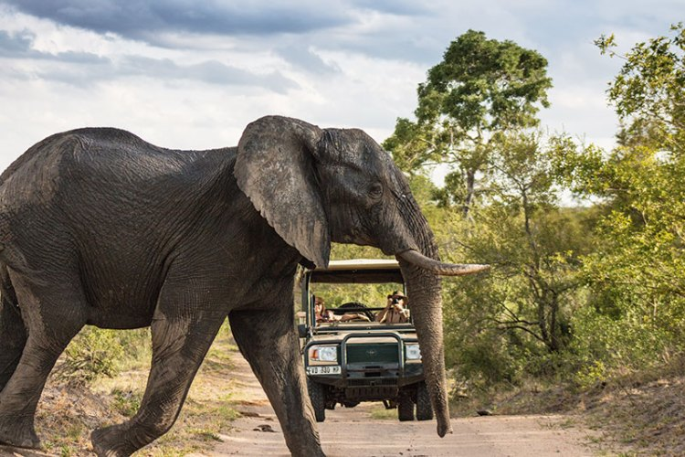 Kruger National Park offers unforgettable wildlife sightings and experiences