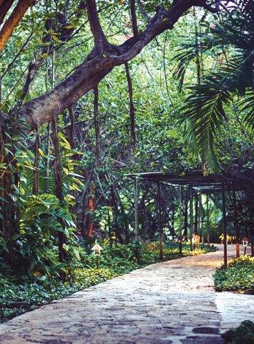 Walkways through the jungle at the resort