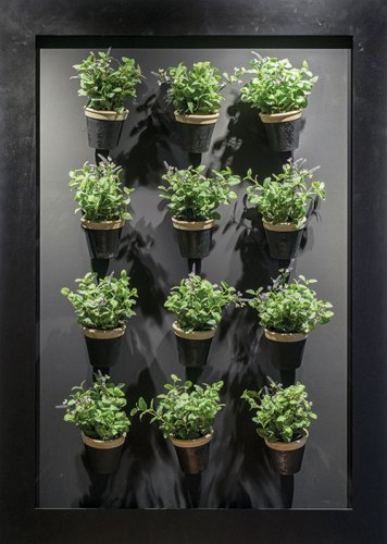All you need is an empty wall or bare fence to create a vertical garden