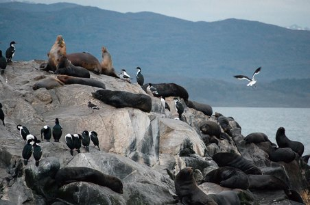 Colonies of seals, sea lions and cormorants