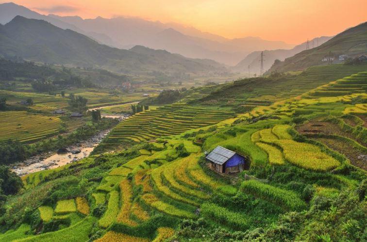 Paddy fields in Vietnam