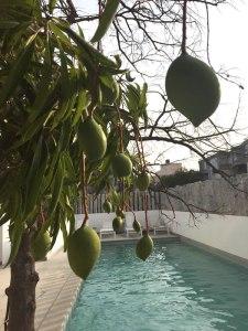 Low-hanging fruit (La Villa)