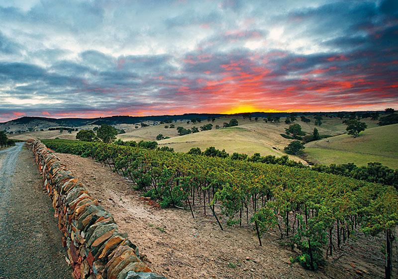 Jacob's Creek vineyard, Australia