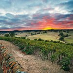 Jacob's Creek vineyard, Australia