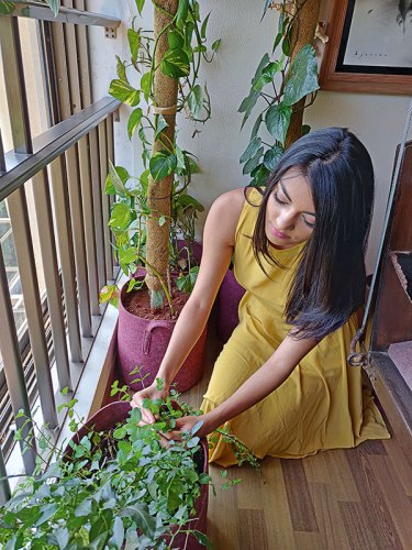Shraddha Bhansali at the kitchen garden in her apartment