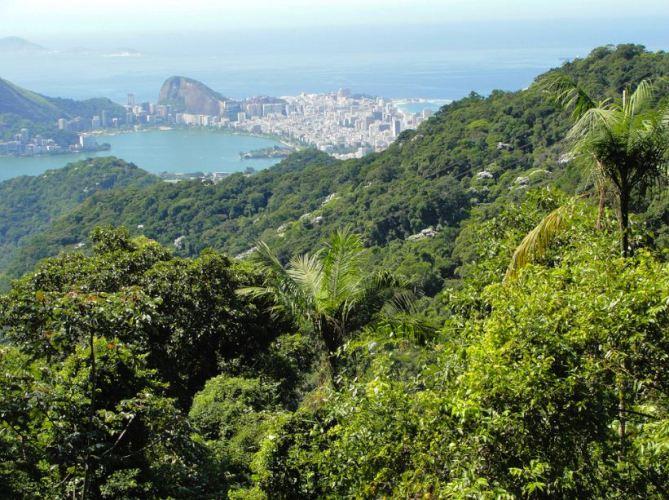 Tijuca Rain Forest