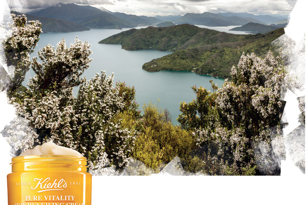 Kiehl's Pure Vitality Skin Renewing Cream, New Zealand