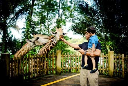 Raj Kaushal: Feeding giraffes at the Singapore Zoo