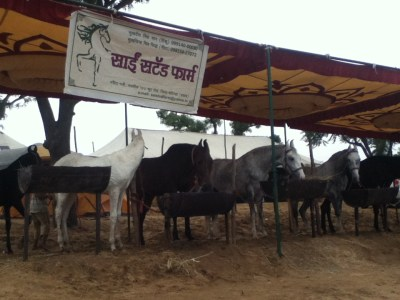 Equestrian corner