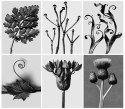 Karl Blossfeldt's Art Forms in Nature Tarq Art Gallery