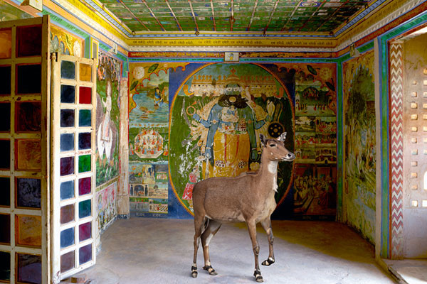 Photographer Karen Knorr, India Song series