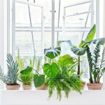 Earth day, plants, indoor plants, interior tips