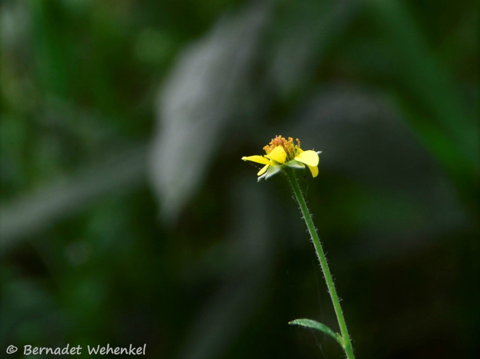 Geel bloempje