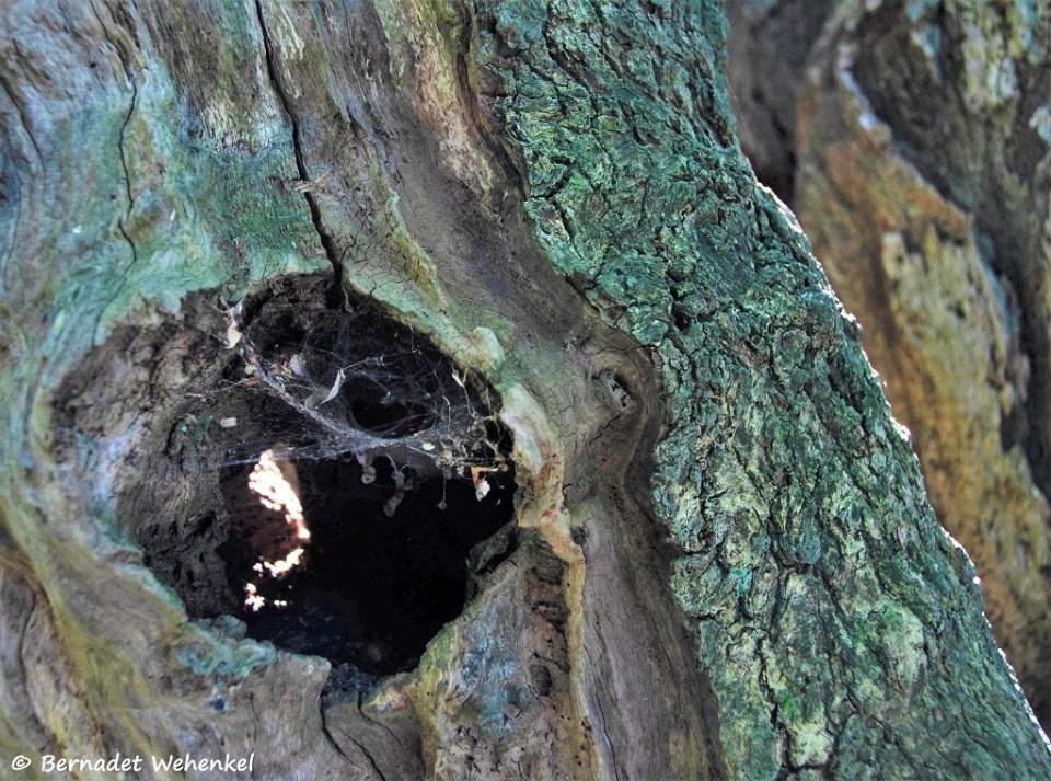 Tijdens een wandeling in Nostang (Morbihan) ontdekten we een laan met oude bomen. Sommige opengespleten, andere met holtes waar het zonlicht heel mooi in viel.