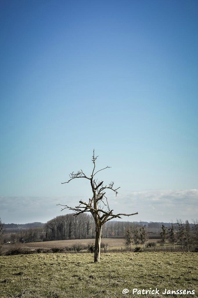 eenzame boom in het landschap