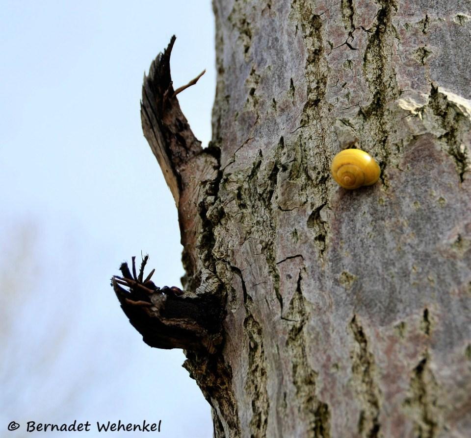 Slakje op een boom