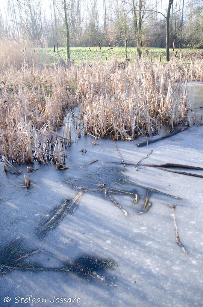 Fascinerende ijslaag op een van de vijvers in het Bellevuebos.
