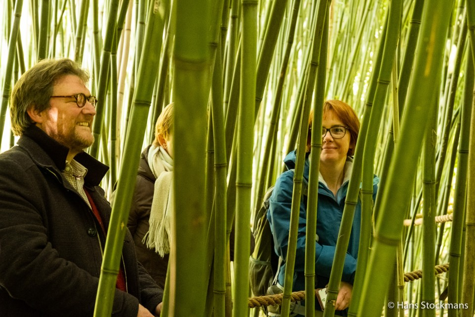 Bamboebos in Bokrijk.