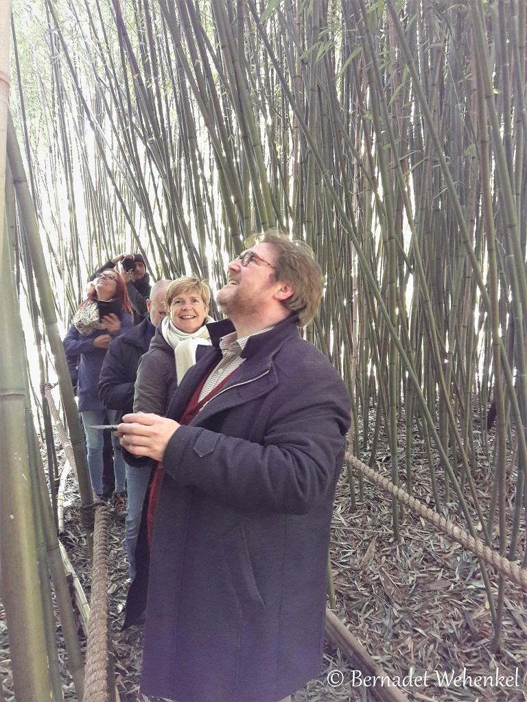 Bamboebos in het Arboretum.
