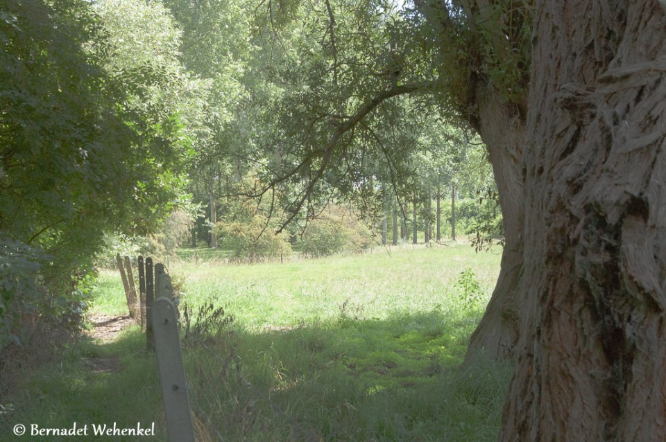 Heel smal GR-wandelpad in Sint-Truiden.