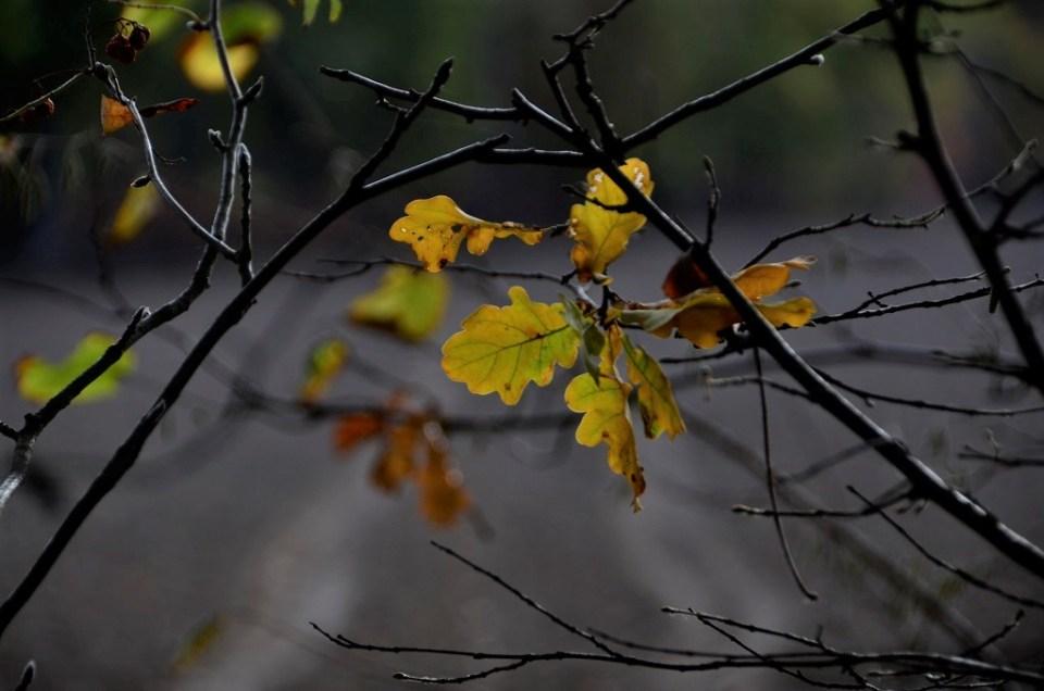 Gele herfstbladeren aan een tak.