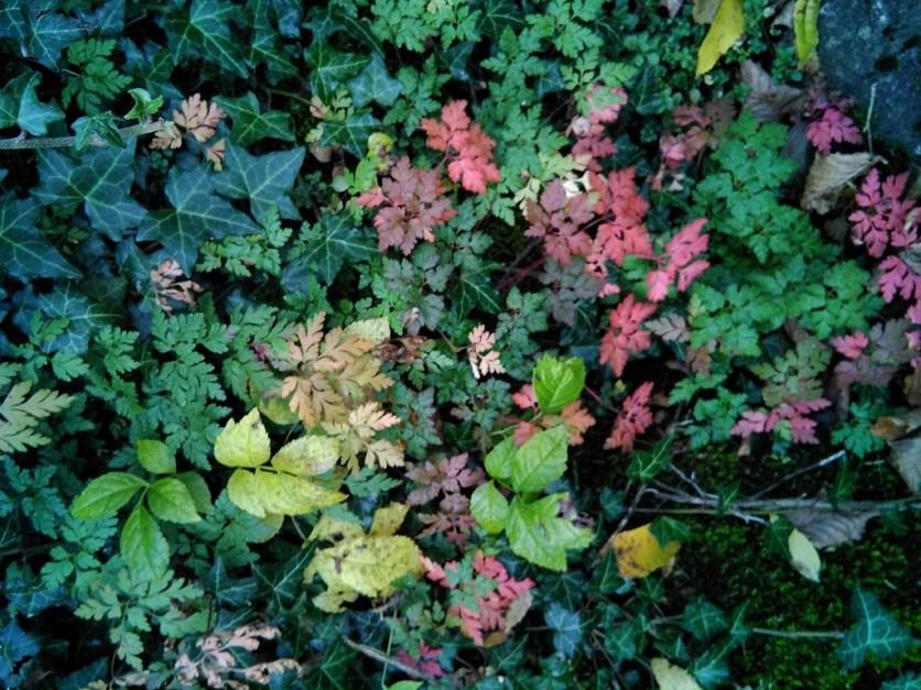 vegetación alpina -TurietoBajo_01