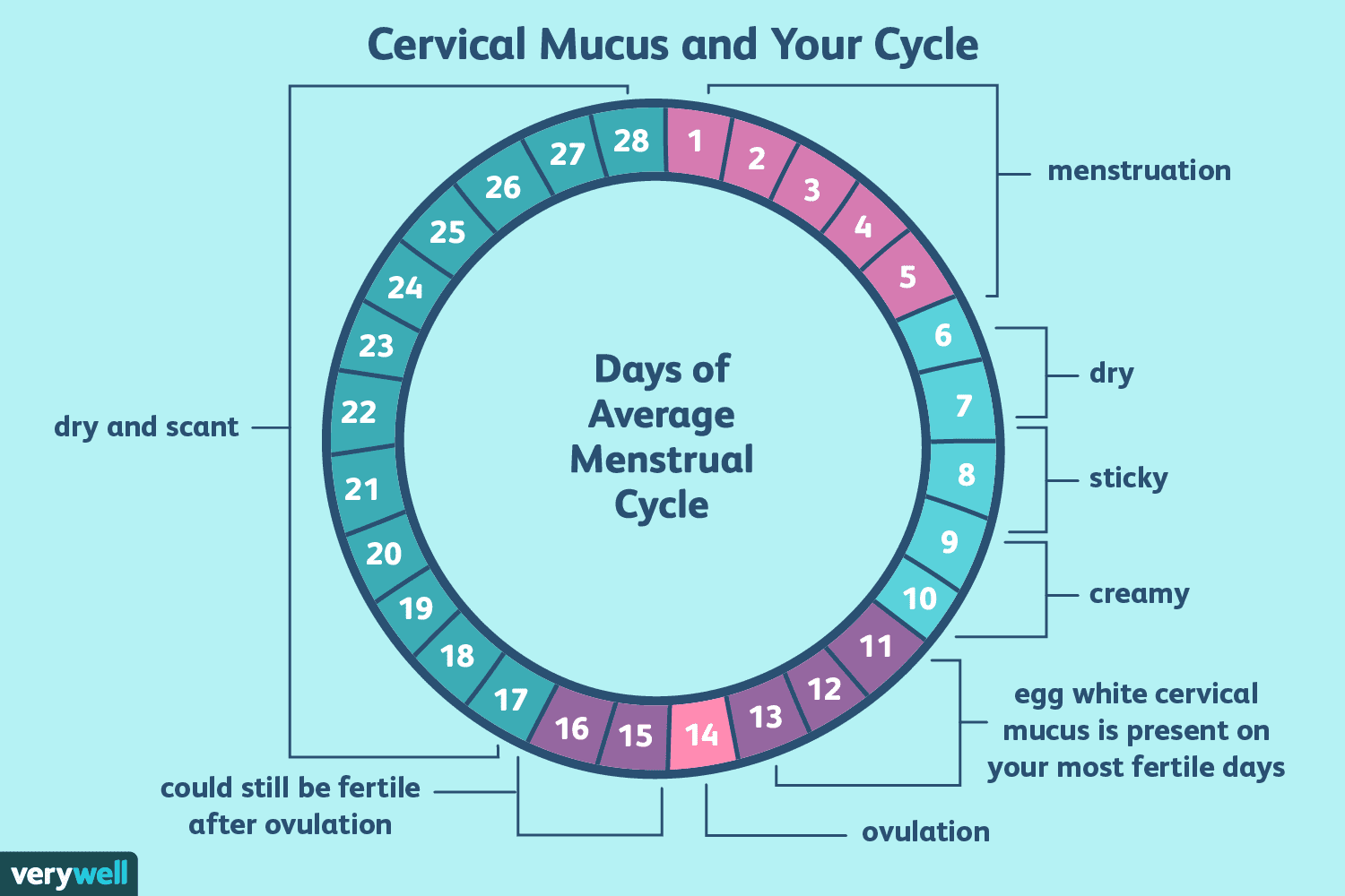 What Is Egg White Cervical Mucus (EWCM)?