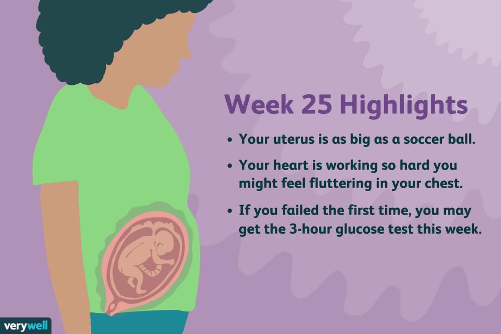 medium resolution of week 25 pregnancy highlights