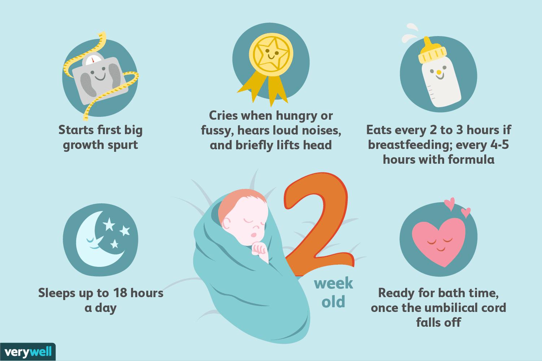 Your 2-Week-Old Baby: Development & Milestones