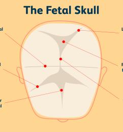 parts of the fetal skull [ 1500 x 1000 Pixel ]