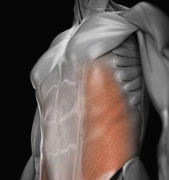 external oblique muscle [ 4385 x 4385 Pixel ]