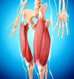 human leg musculature computer artwork  [ 4180 x 4180 Pixel ]