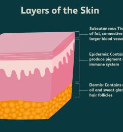 the epidermis [ 1500 x 1000 Pixel ]