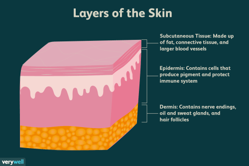small resolution of the epidermis