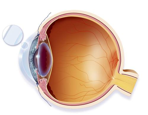 small resolution of lateral eye anatomy