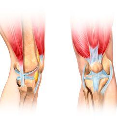 front of the knee diagram [ 3911 x 3911 Pixel ]