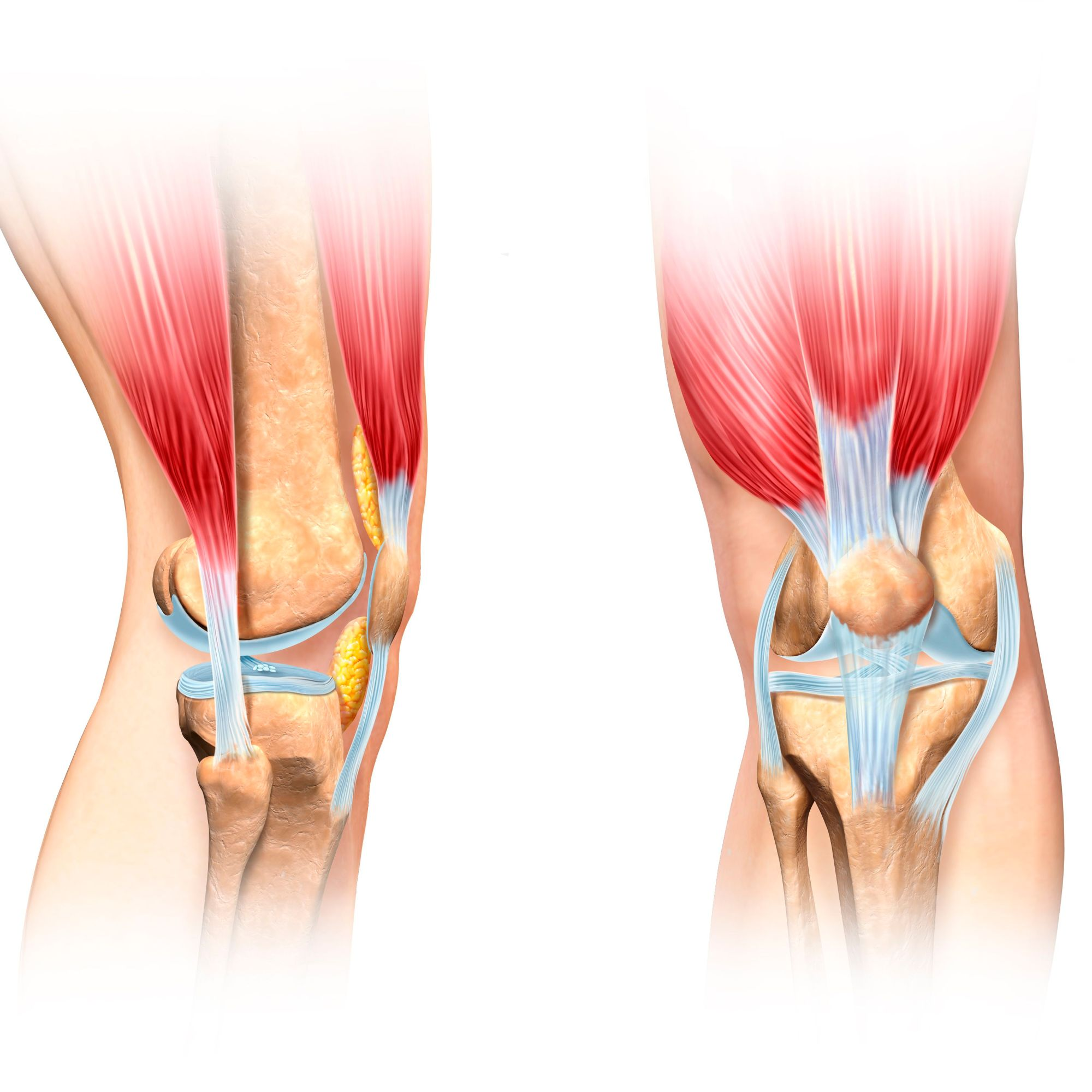hight resolution of front of the knee diagram