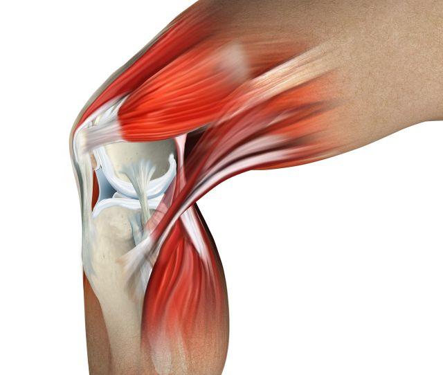 Knee Anatomy Artwork