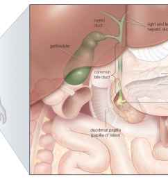 the gallbladder and bile ducts in situ [ 2550 x 1442 Pixel ]