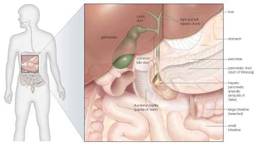 small resolution of the gallbladder and bile ducts in situ
