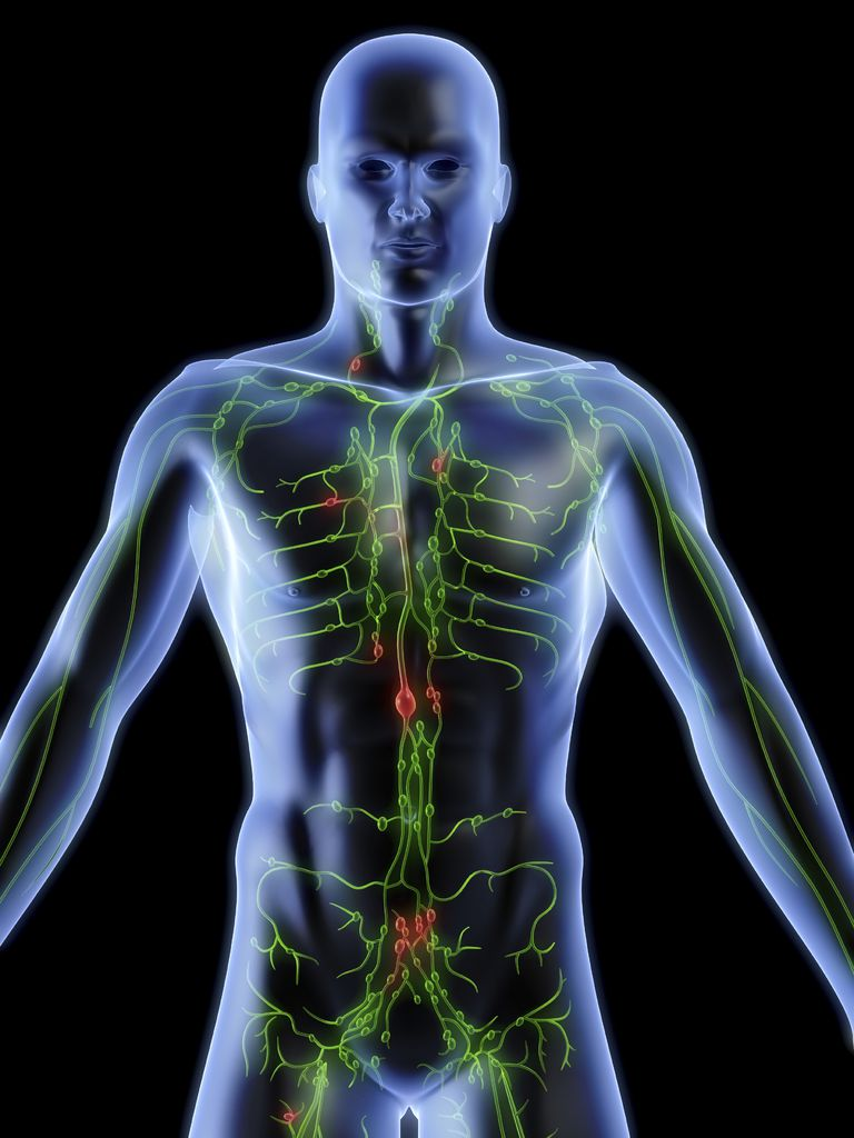 hight resolution of image of the human body with the location of lymph nodes